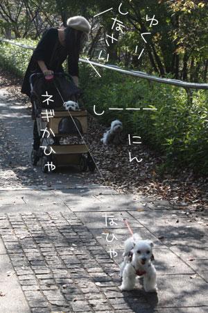 11_6_0281.jpg