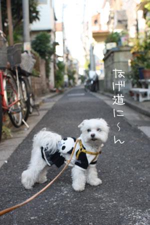 11_6_3097.jpg
