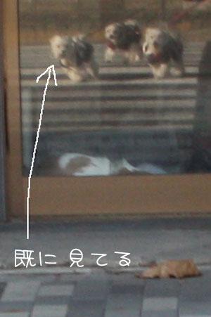 11_6_3113a.jpg
