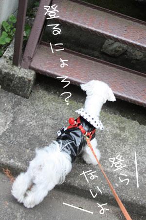 11_8_0553.jpg