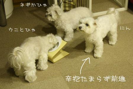11_9_8447.jpg