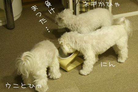 11_9_8450.jpg