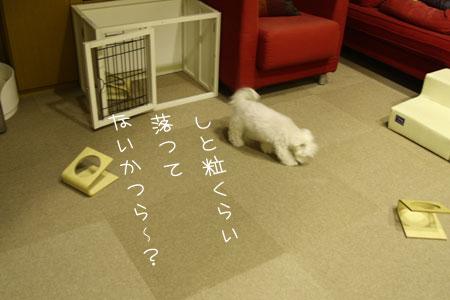11_9_8481.jpg