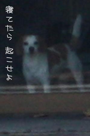 12_10_6568a.jpg