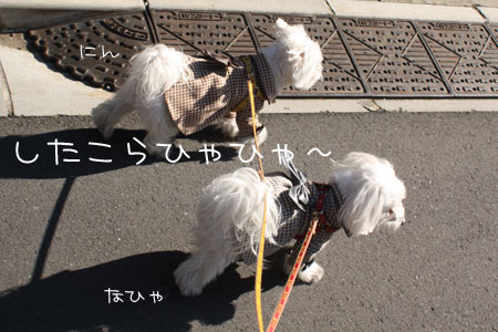 12_18_6890.jpg