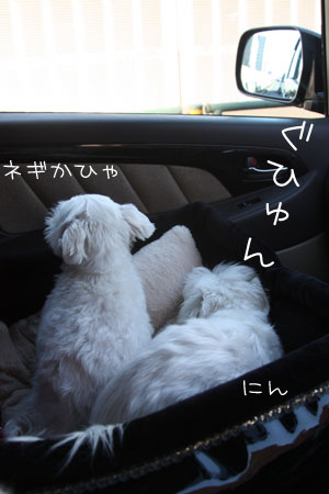 12_20_7535.jpg