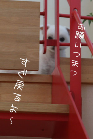 12_21_7754.jpg