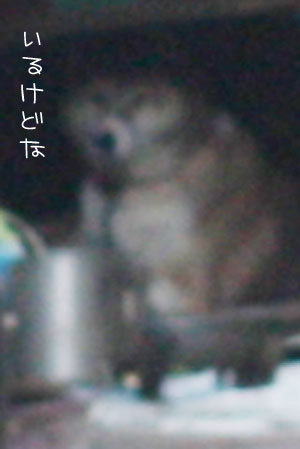12_22_7231a.jpg