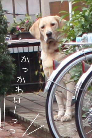 12_22_7259a.jpg