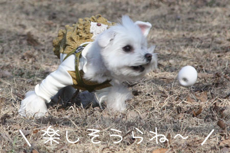 12_25_9012.jpg