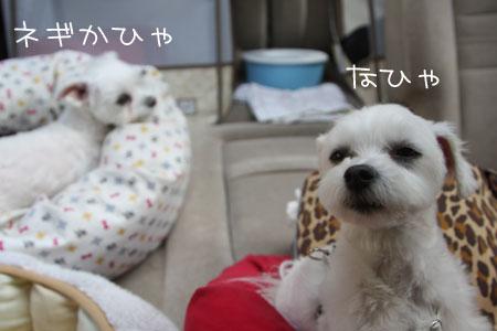 12_26_9247.jpg