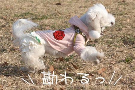 12_26_9355.jpg