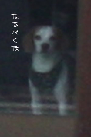 12_29_7853a.jpg