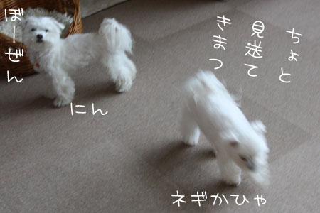 12_31_9866.jpg