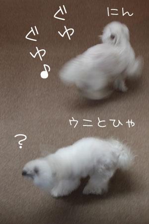 12_31_9886.jpg