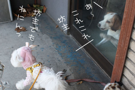 12_4_6032.jpg