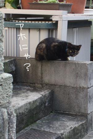 12_6_6239.jpg
