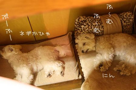 12_9_5780.jpg