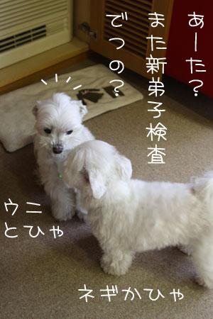 1_11_1253.jpg