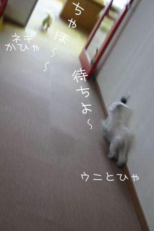 1_11_1260.jpg