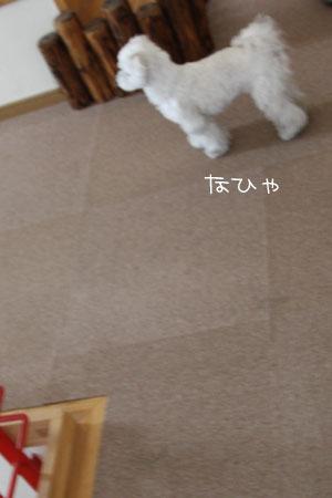 1_11_1268.jpg