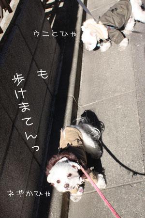 1_17_0309.jpg