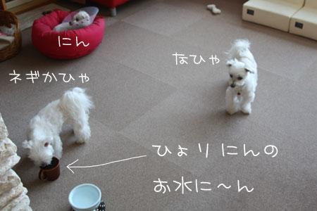 1_26_3109.jpg