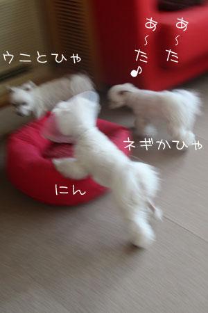 1_26_3151.jpg
