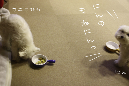 1_5_8149.jpg