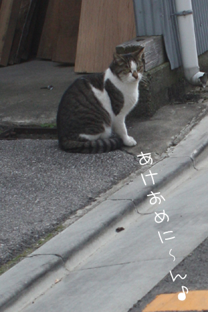 1_5_8219.jpg