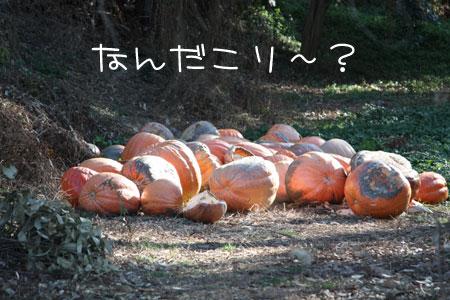 1_9_1121.jpg