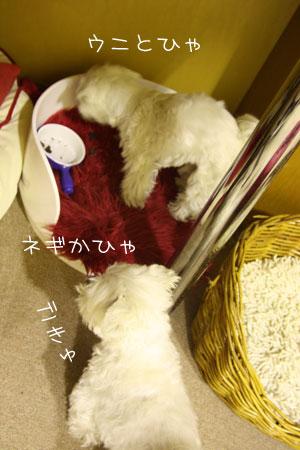 2_15_5293.jpg