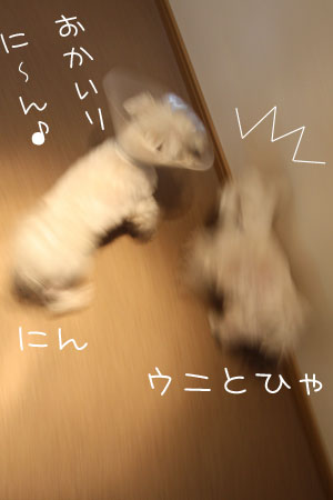 2_1_3878.jpg