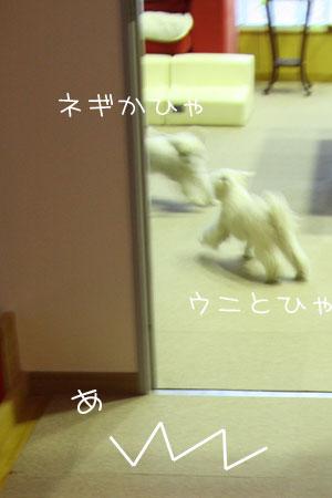 2_1_3897.jpg