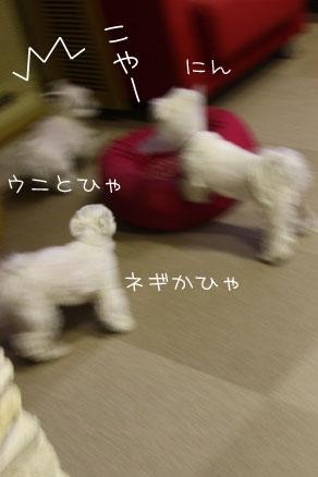2_1_3902.jpg