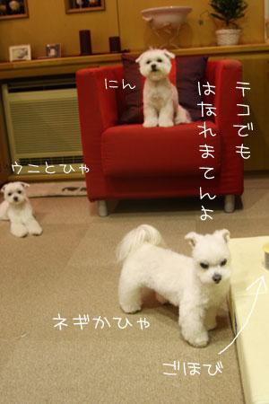 2_21_6002.jpg