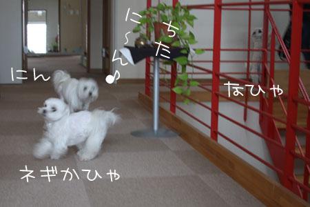 2_3_4008.jpg