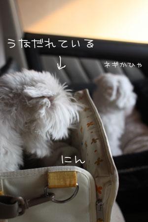 2_4_1502.jpg