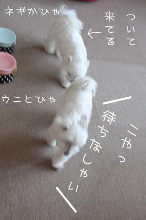 2_6_4364.jpg