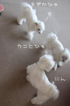 2_6_4365.jpg