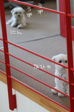 2_9_4743.jpg