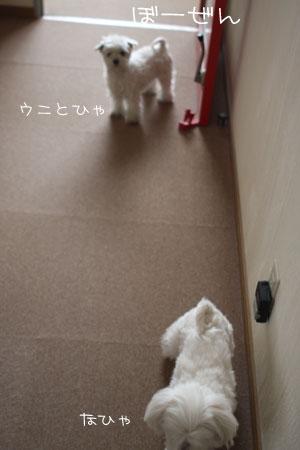 3_11_3403.jpg
