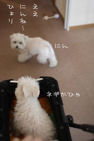 3_11_3405.jpg