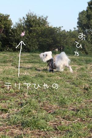 3_11_9678.jpg