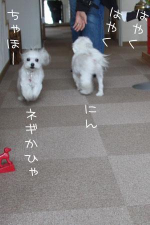 3_12_9730.jpg