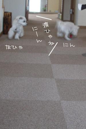 3_13_0085.jpg