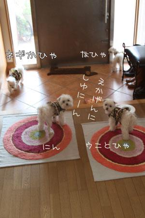 3_16_0530.jpg