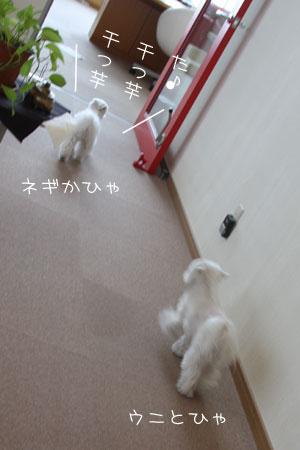 3_16_0534.jpg