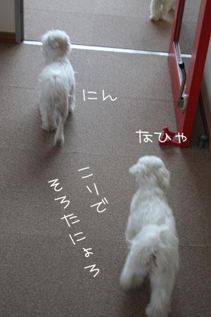 3_16_0552.jpg