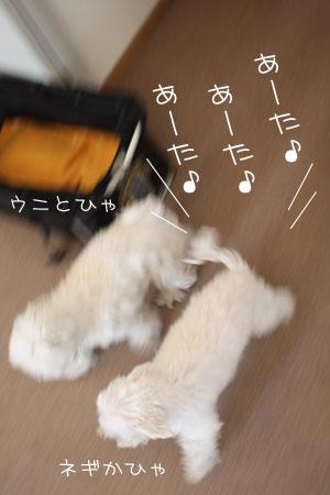 3_25_4014.jpg